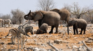 20 Animals That Deserve An Award For Best Parent…