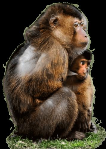 monkey-727x1024